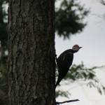 bird-watching at Saratoga Beach Resort